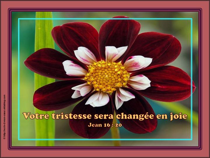 Votre tristesse sera changée en joie - Jean 16 : 20
