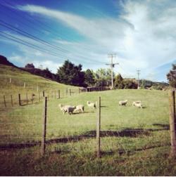 Aika Mitsui etudie en Nouvelles-Zélande !