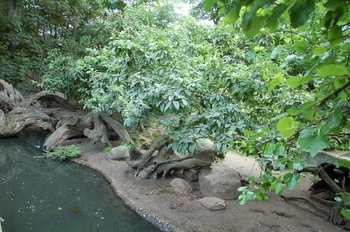 Zoo Duisburg 2012 826