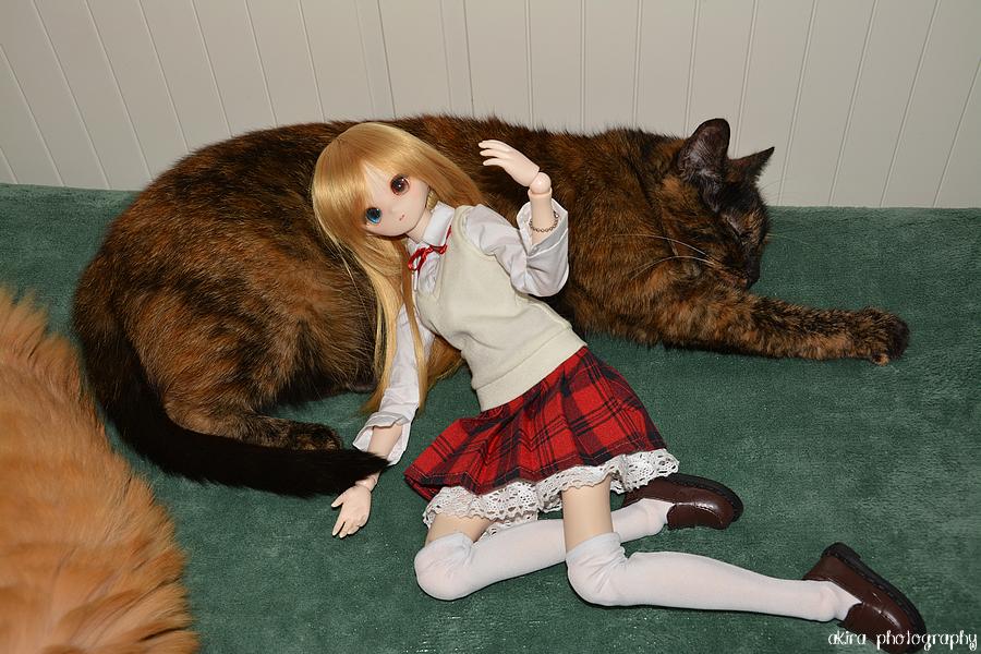 Urumi fait des câlins aux chats
