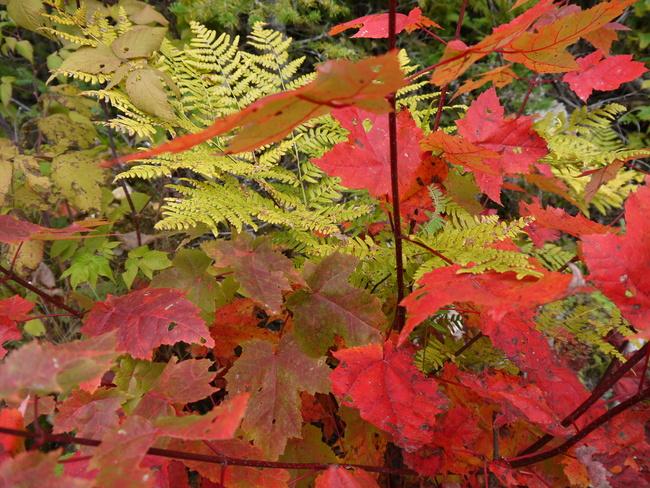 L'automne pour Mildéfis (2)