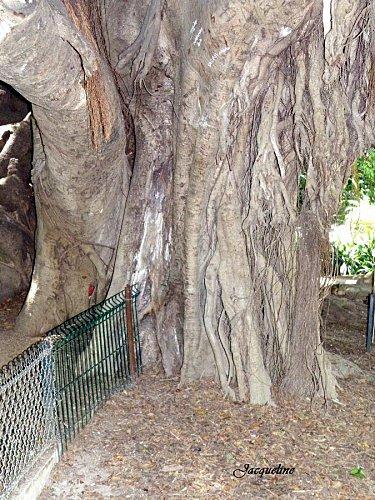 arbre8.jpg