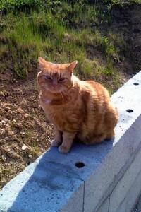 Mon Chat Mimine sur la terrasse