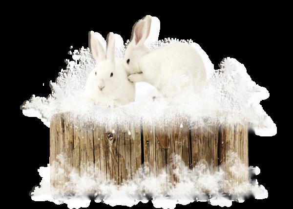Lapins blancs en hiver