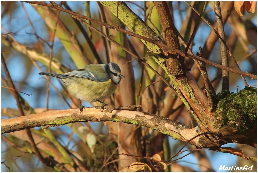 Oiseaux-02-8752.JPG