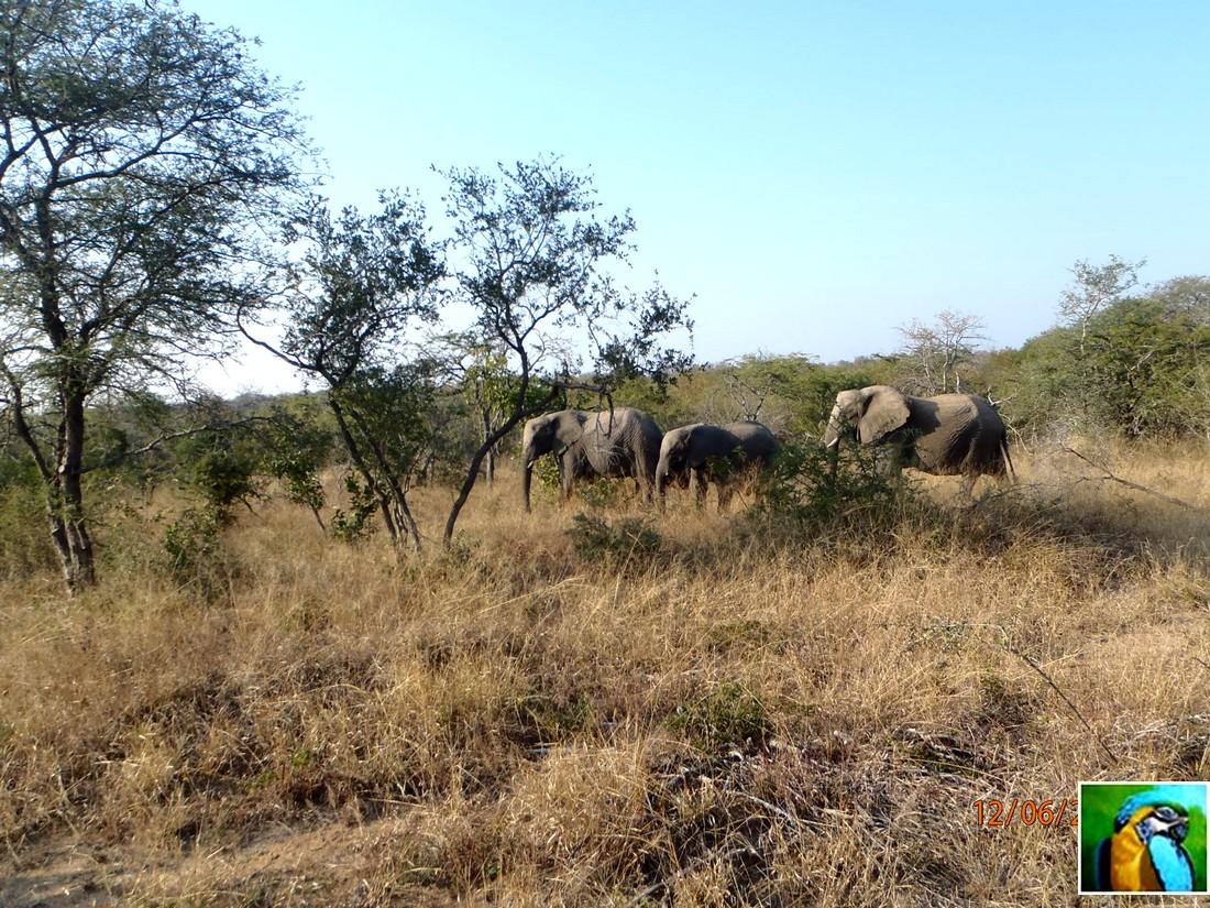 Afrique du Sud: juin 2018: Dernier safari et départ