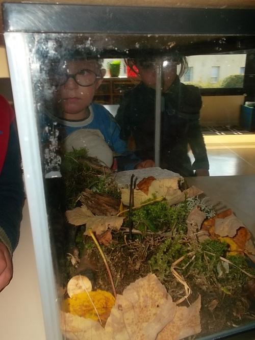 Notre insectarium avec les MS/GS