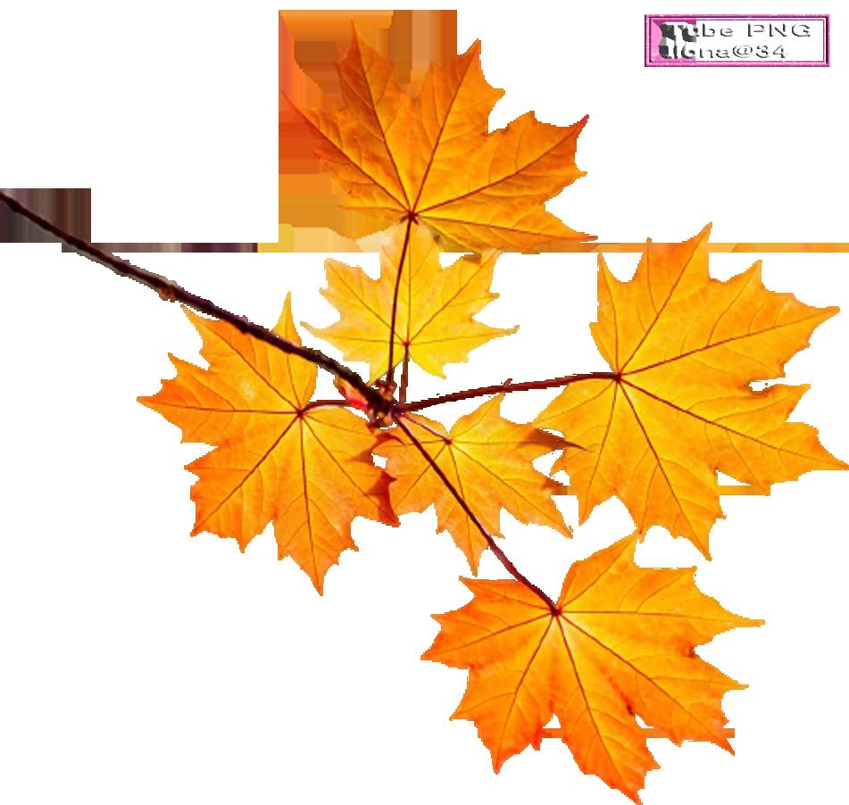 Tubes Branches d'automne