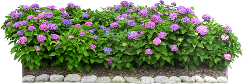 Flowers in the Garden 52.png