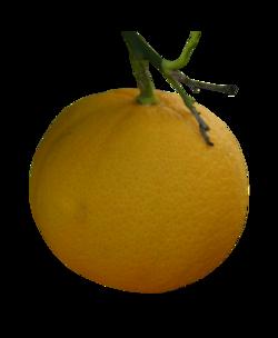 Tubes oranges
