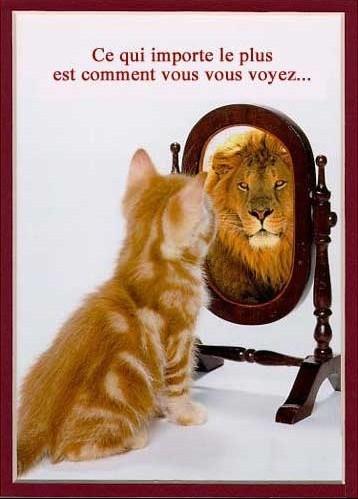 chat-lion-724168210.jpg