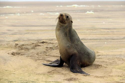 Swakopmund - Walvis Bay