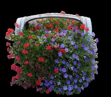 Tubes printemps : Fleurs
