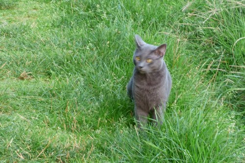 Giordano, un chat pas comme les autres