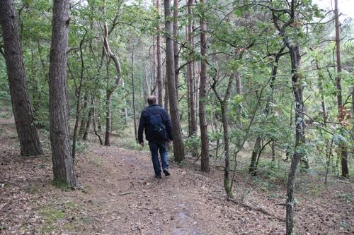 Promenade en forêt, moins dangereuse à pied qu'en VTT