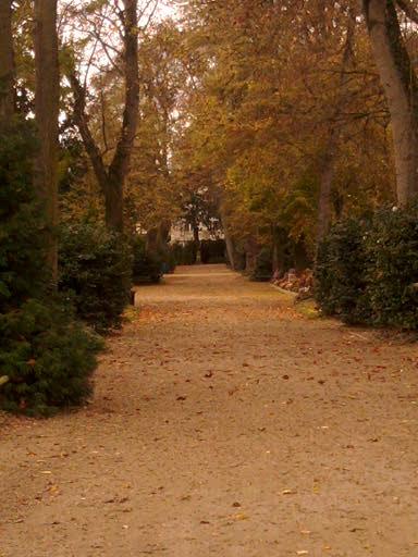 Allée d'un jardin des plantes en automne