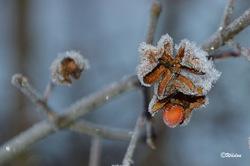 Que mangent les oiseaux en hiver