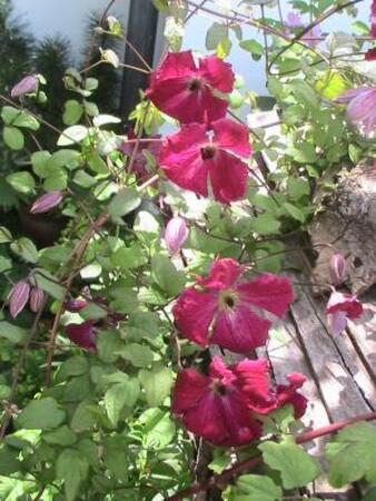 Les plantes abandonnées ou perdues (4/4)