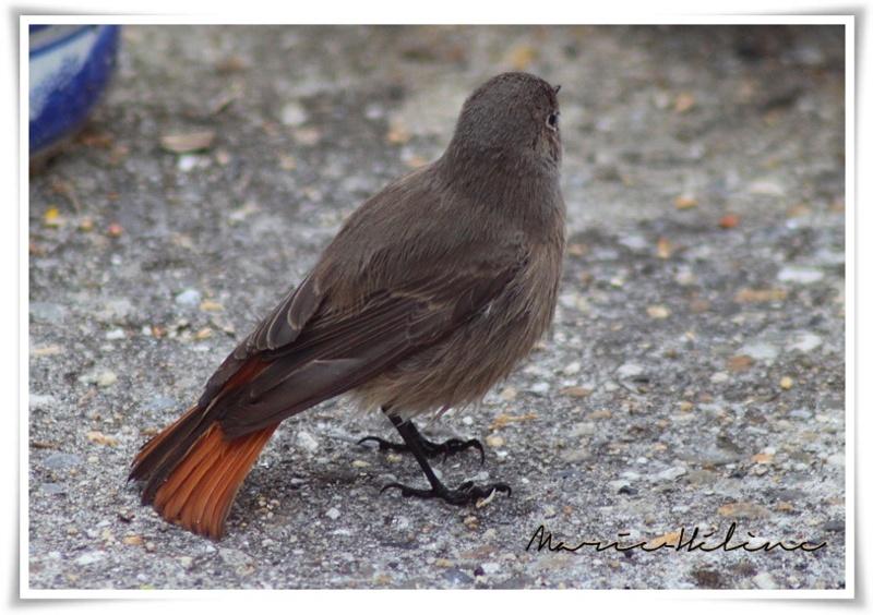 Un oiseau de la nature