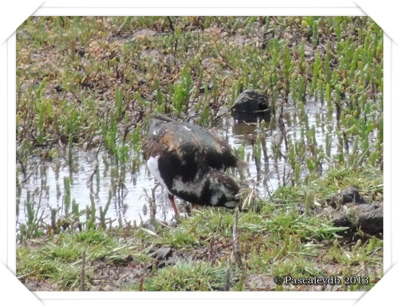 Symphonie printanière à la réserve ornithologique du Teich - 8/20