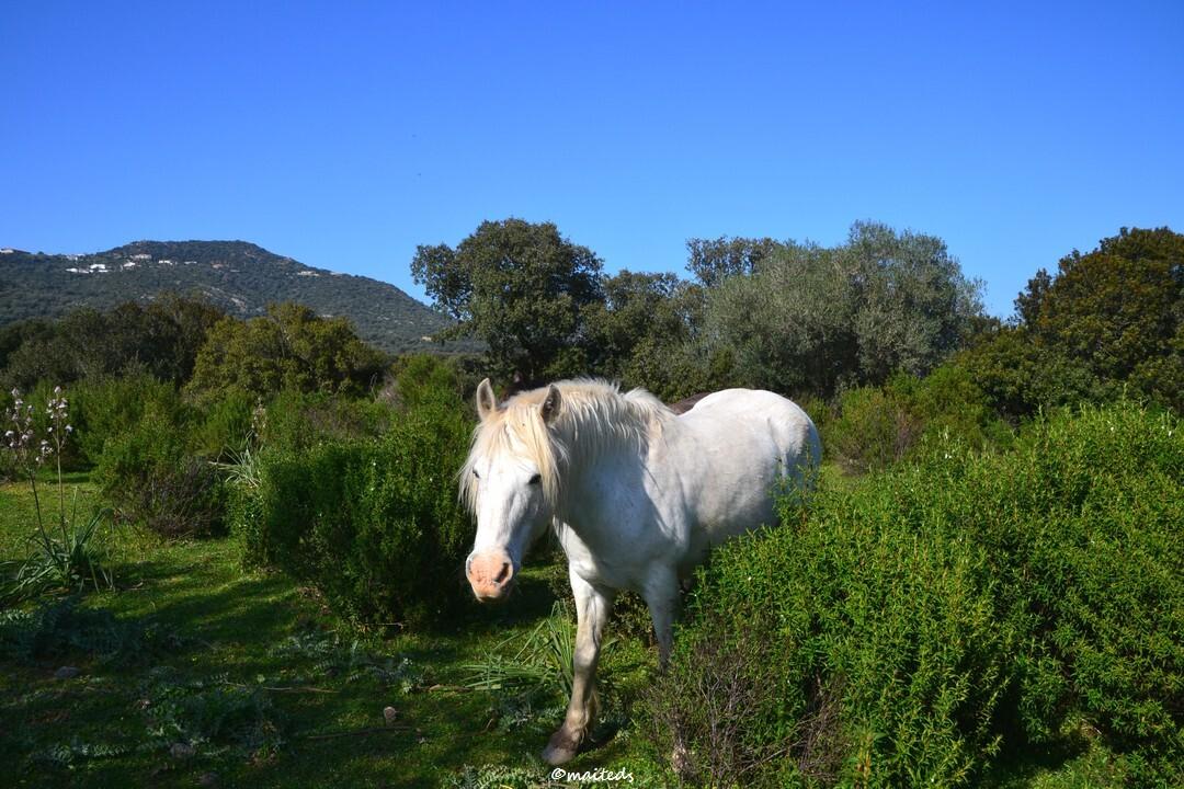 Pêle mêle - cheval blanc
