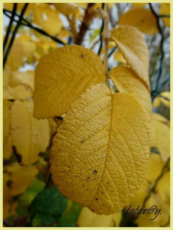Couleurs chaudes de l'automne.