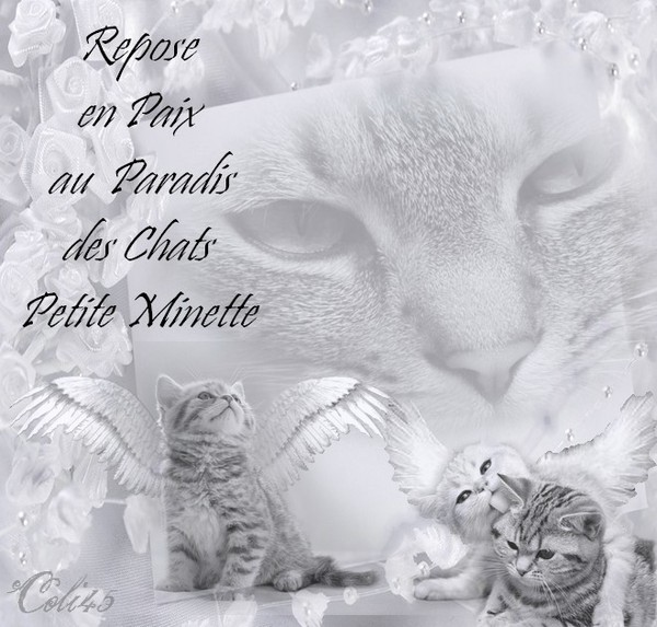 HOMMAGE A MINETTE