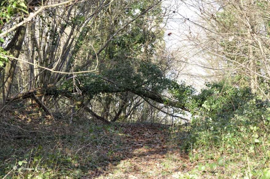 bois-arbre-1640.jpg