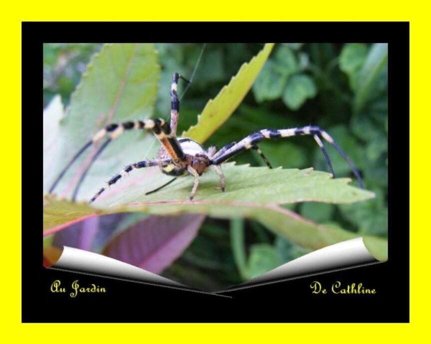 araignée à identifier 7 Août 2014 (49)