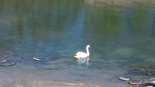 lac de créteil - suite