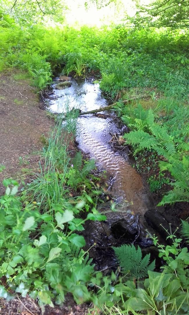 étangs  calmes  (la promeneuse  3)
