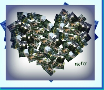 @ tout coeur bon choix d'hébergement Nelly By Rose63