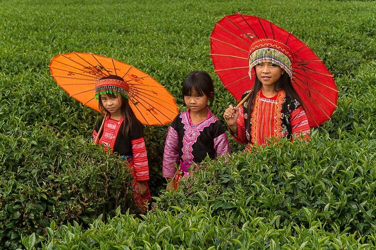 Paradoxe, le Vietnamien dans la nature