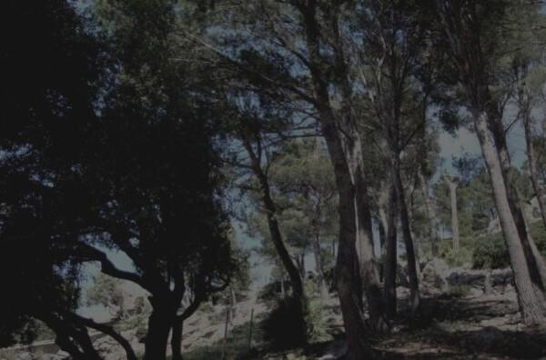 Ulysse-2.jpg