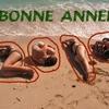 Noyeux Joël et Bonne année !!!.jpg
