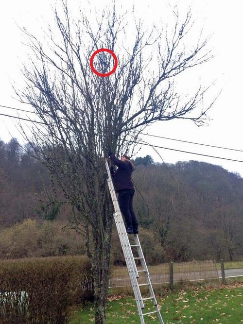 Je récupère mon drone dans l'arbre de mon jardin