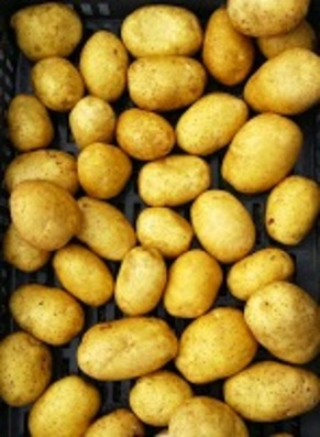 Zakouski aux pommes de terre
