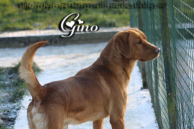 Gino - Nouvelles photos