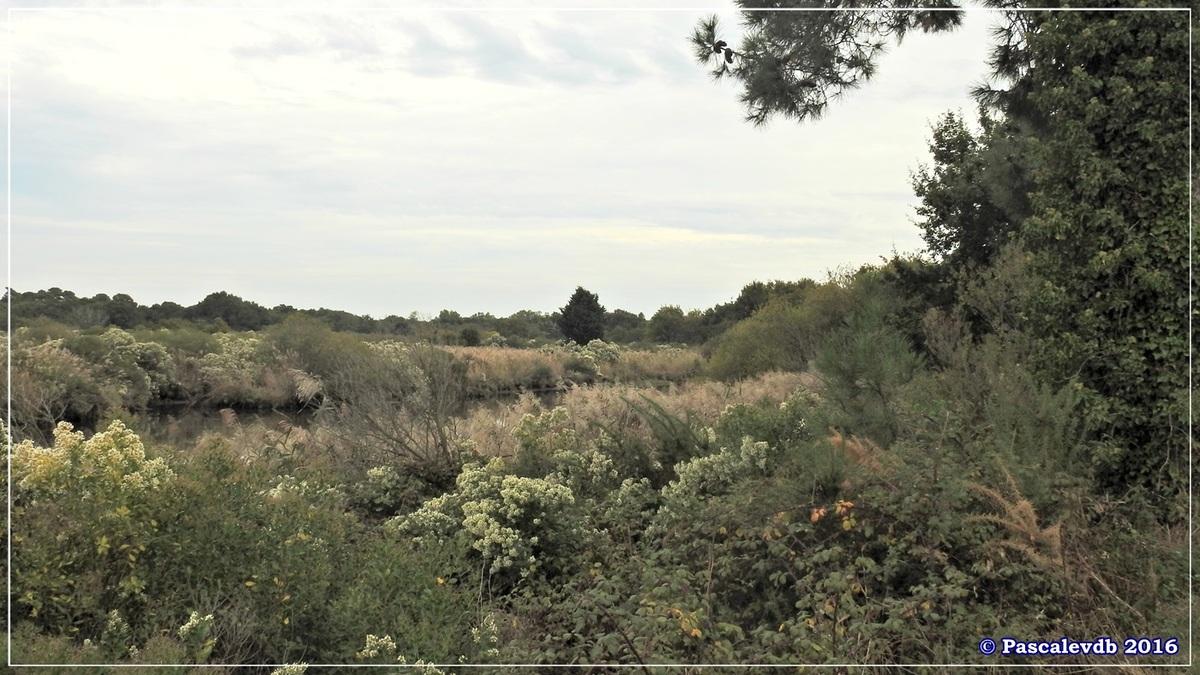 Plaines du Teich et domaine de Fleury - Octobre 2016 - 8/13