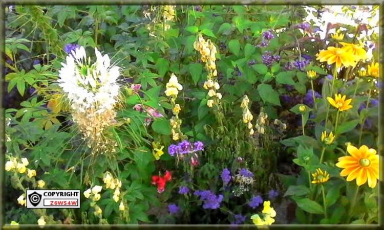 le mois d'Août ,le soleil ,et des massifs de fleurs magnifiques,un plaisir pour les Yeux