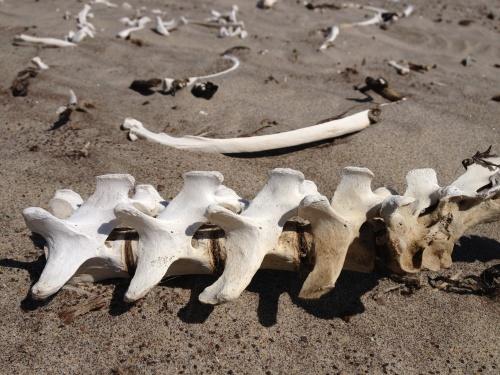 Road to Skeleton Coast...
