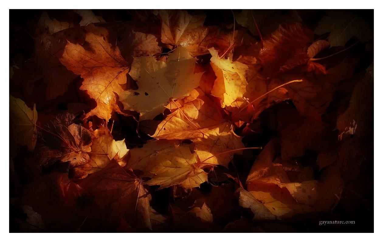 L'automne en fête