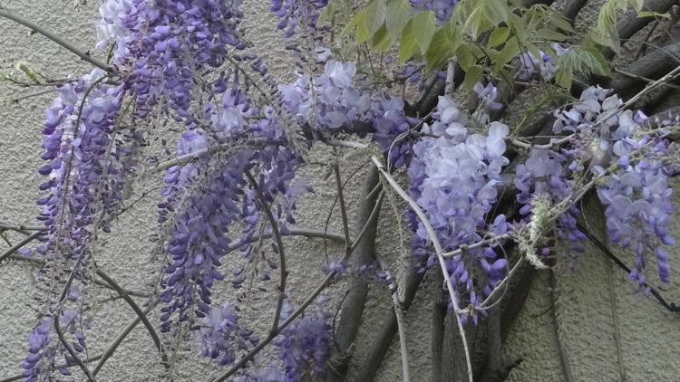 Fleurs de ce dimanche