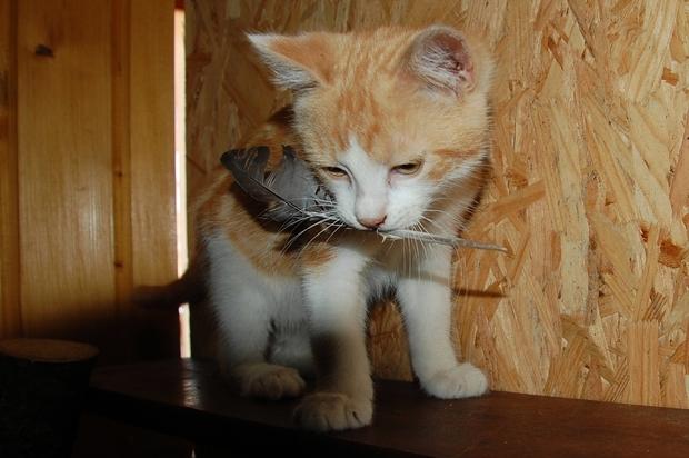 chaton24juilleti