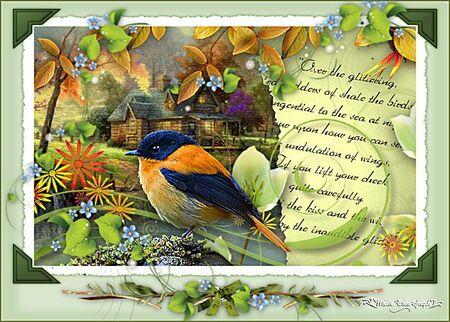 Orange Flycatcher