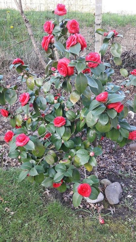 Les fleurs printanières