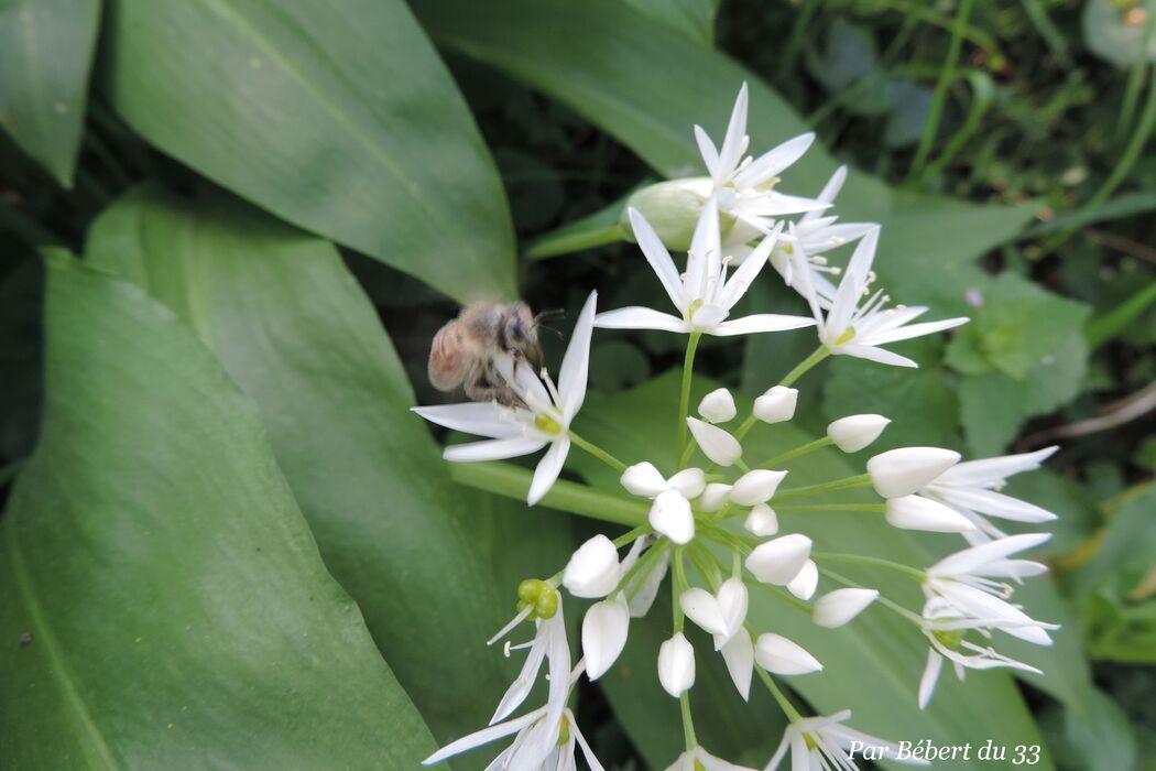 une fleur blanche