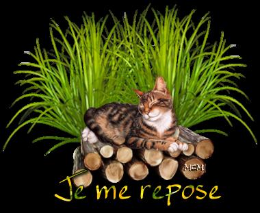 Les chats - Page 2 JH_dqh-39ZP-qKRYen_xVjupIjY