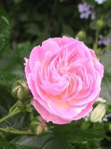 Bouquet Parfait2