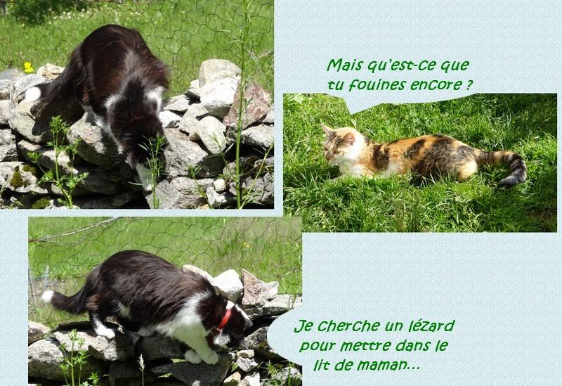Entre chats et chiens….